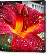 Rain Kissed Lilly Profile 1 Acrylic Print