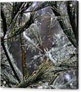 Rain On Pine Needles Acrylic Print