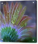 Rain Petals Acrylic Print