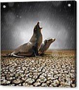 Rain Relief Acrylic Print