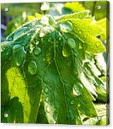 Rain Soaked Leaf Acrylic Print