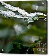 Rain Sparkles Acrylic Print