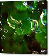 Web Drops Acrylic Print by Candice Trimble