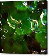 Web Drops Acrylic Print