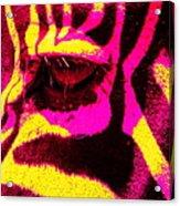 Rainbow Animals - Zebra  Acrylic Print