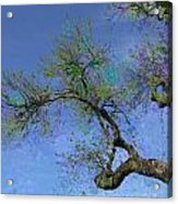 Rainbow Aspirations Acrylic Print