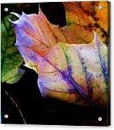 Rainbow Autumn Acrylic Print