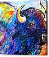 Rainbow Buffalo Acrylic Print