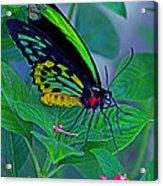 Rainbow Butterfly Acrylic Print