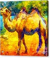 Rainbow Camel Acrylic Print