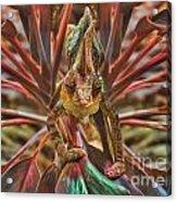 Rainbow Chameleon Acrylic Print