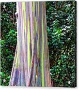 Rainbow Eucalyptus 3 Acrylic Print