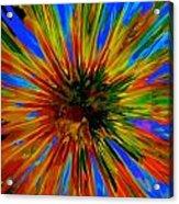 Rainbow Exuberance Acrylic Print
