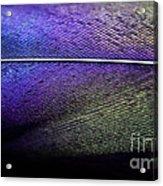 Rainbow Feather Acrylic Print