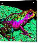 Rainbow Frog 3 Acrylic Print