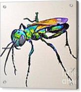 Rainbow Insect Acrylic Print