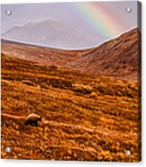 Rainbow Over Grizzly In Denali Acrylic Print