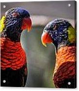 Rainbow Parrot Acrylic Print