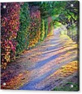 Rainbow Path Acrylic Print by William Schmid