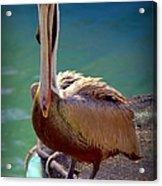 Rainbow Pelican Acrylic Print