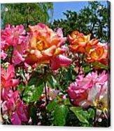 Rainbow Sorbet Roses Acrylic Print by Denise Mazzocco