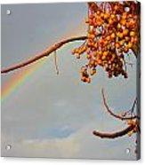 Rainbow Through Tree Acrylic Print