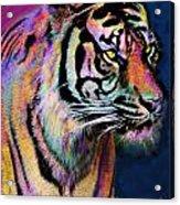 Rainbow Tiger Acrylic Print