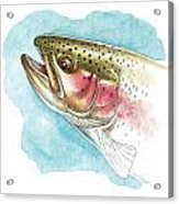 Rainbow Trout Study Acrylic Print by JQ Licensing