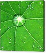 Raindrop Junction Acrylic Print