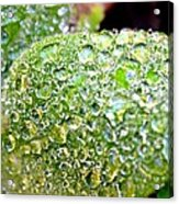 Lambs Ear Raindrops Acrylic Print by Candice Trimble