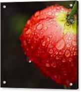 Raindrops And Poppy Acrylic Print