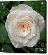 Raindrops And Roses Acrylic Print