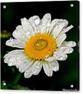 Raindrops On Daisy Acrylic Print