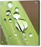 Raindrops On Flower Acrylic Print