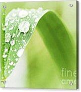 Raindrops On Grass Acrylic Print
