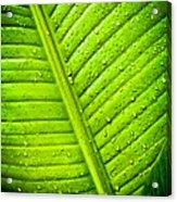 Raindrops On Green Leaf Acrylic Print