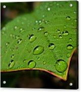 Raindrops On Plumeria Leaf Acrylic Print