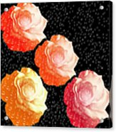 Raindrops On Roses - My Favorite Things Acrylic Print