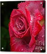 Raindrops On Roses Acrylic Print by Peggy Hughes
