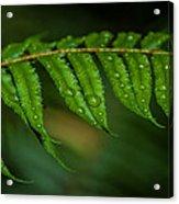 Rainfall On Leaf Acrylic Print