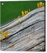 Rainforest Blooms Acrylic Print