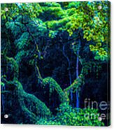 Rainforest In Waimea Valley Acrylic Print by Lisa Cortez