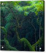 Rainforest In Waimea Valley Too Acrylic Print