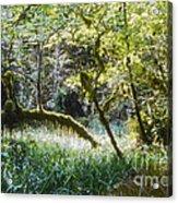 Rainforest Landscape Acrylic Print