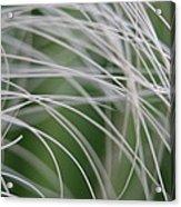 Rainforest Palm Tree Leaf Close Up  Acrylic Print
