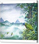 Rainforest Realm - St. Lucia Parrots Acrylic Print