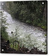 Rainforest River Acrylic Print