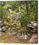 Rainforest Rock Slide Acrylic Print