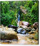 Rainforest Stream New Zealand Acrylic Print