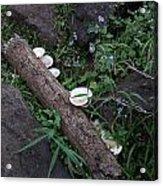 Rainforest Vegetation Moss And Fungi Acrylic Print